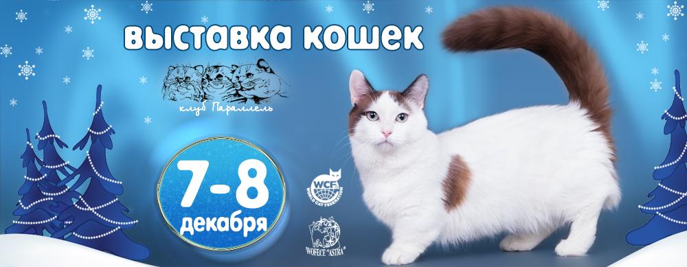 выставка кошек в воронеже 7-8 декабря