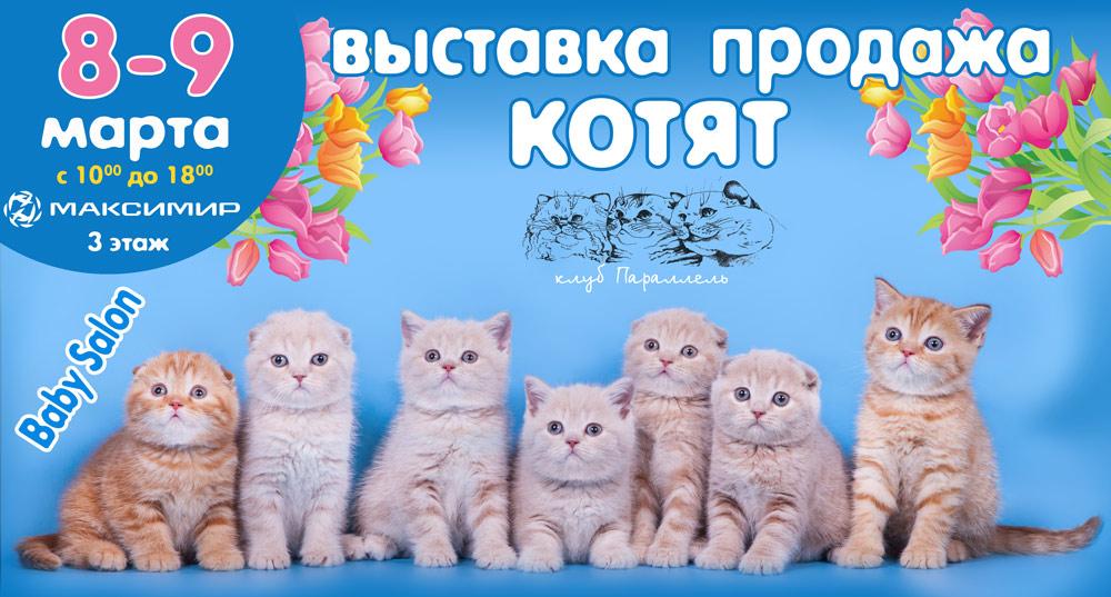 выставка кошек воронеж максимир 2018