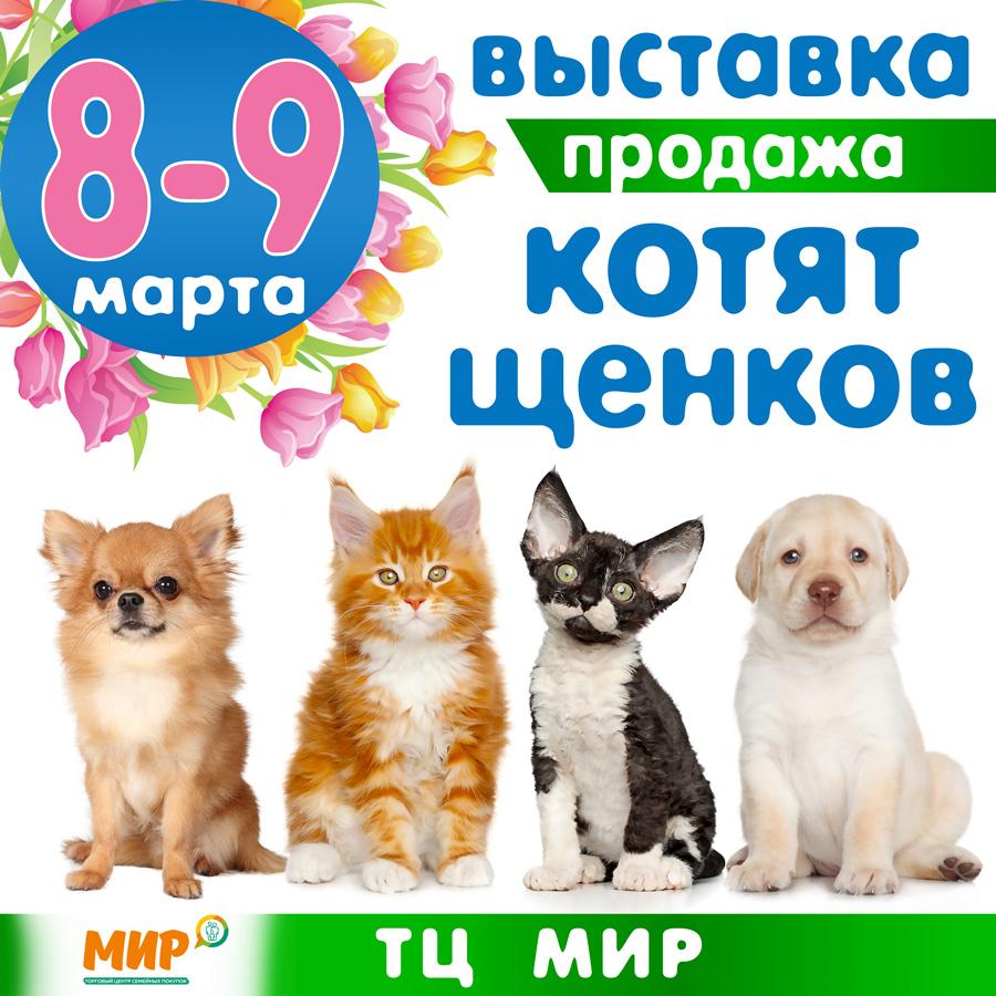 выставка котят и щенков