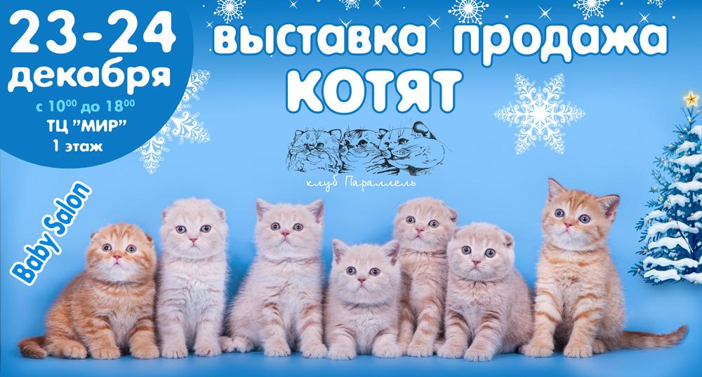 выставка кошек воронеж 2017
