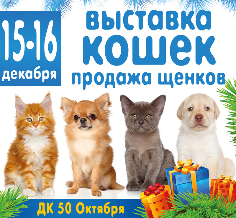 выставка кошек в воронеже 2018