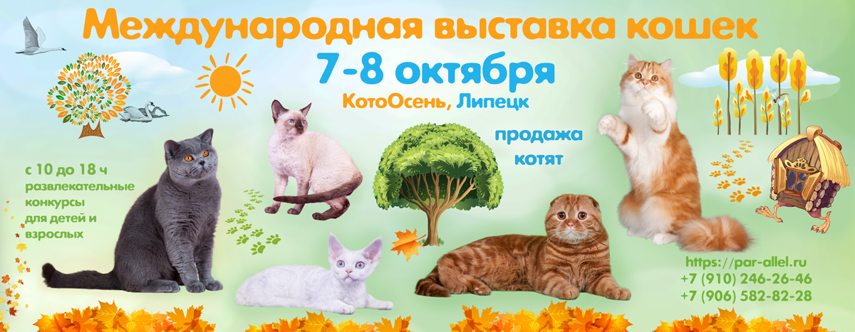 выставка кошек липецк