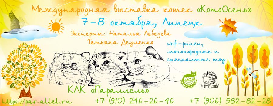Выставка кошек в Липецке
