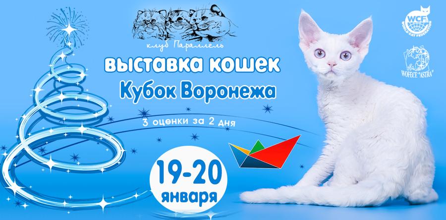 выставка кошек в воронеже 2019 левый берег