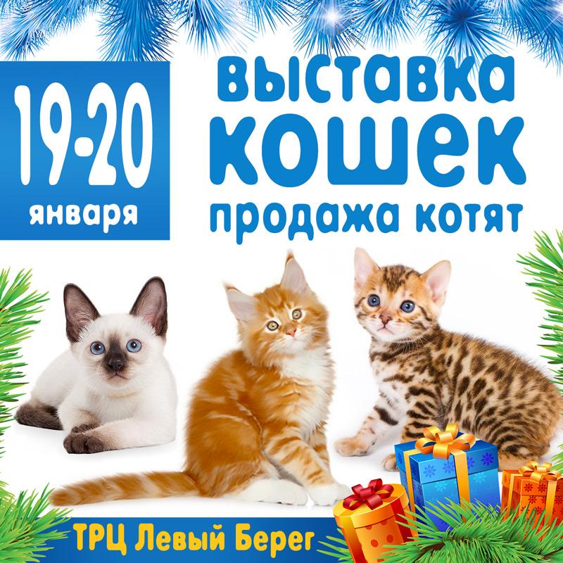 выставка кошек в воронеже 2019