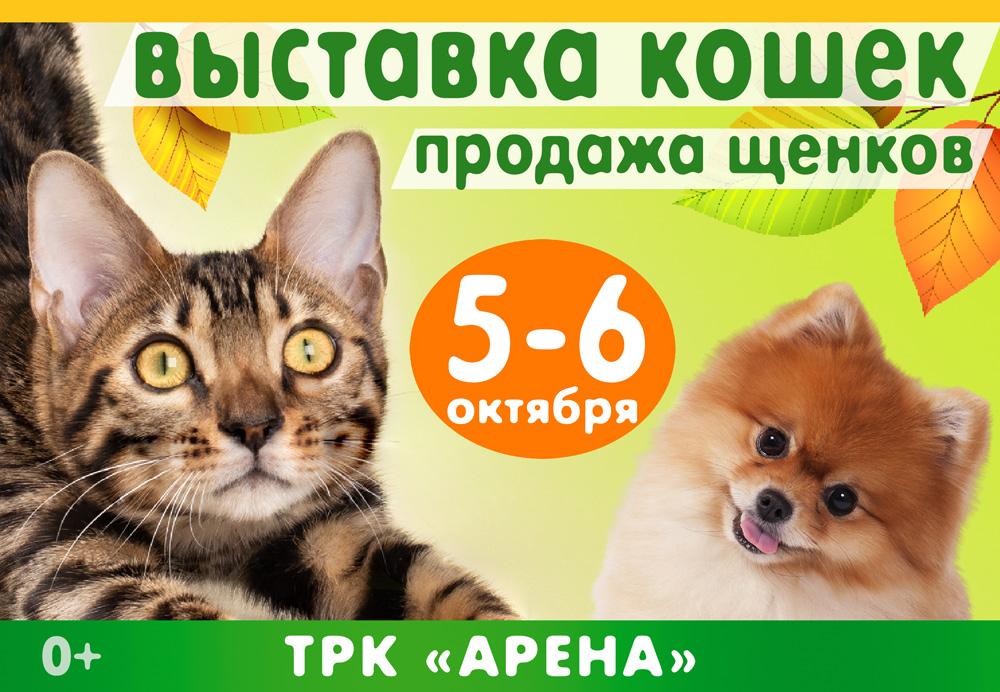 выставка кошек в воронеже 5-6 октября