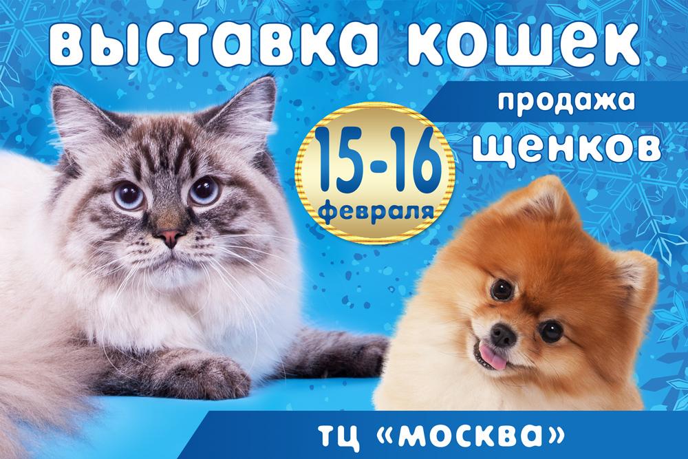 выставка кошек в воронеже 2020