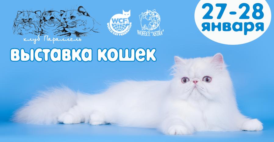 международная выставка кошек в воронеже