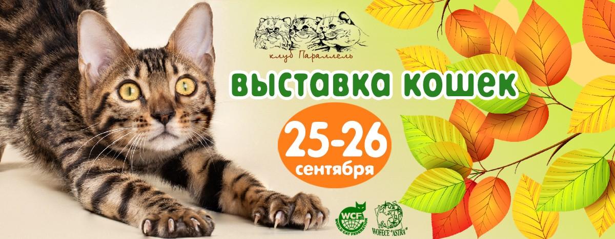выставка кошек в воронеже 25-26 сентября 2021