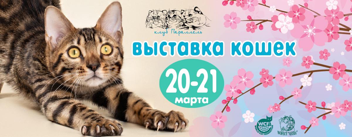 выставка кошек 20-21 марта