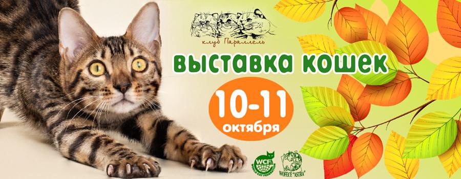 выставка кошек в воронеже 10-11 октября