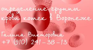 Определение группы крови кошек в Воронеже
